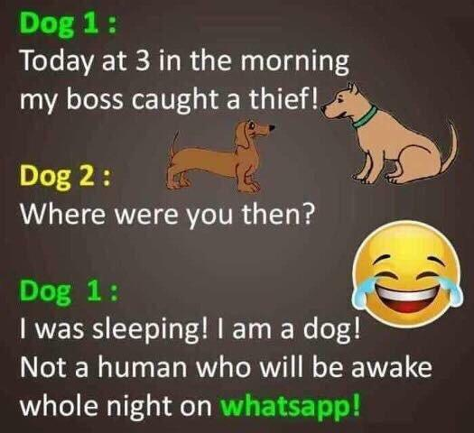Those darn humans always up all night on WhatsApp