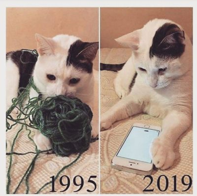 Even cats are effected by cell phone addiction