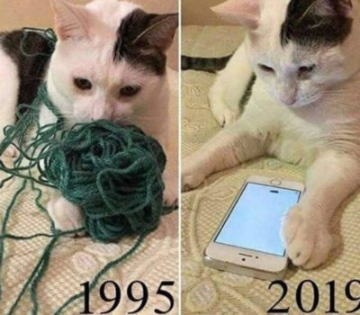 Cats Arent The Same…