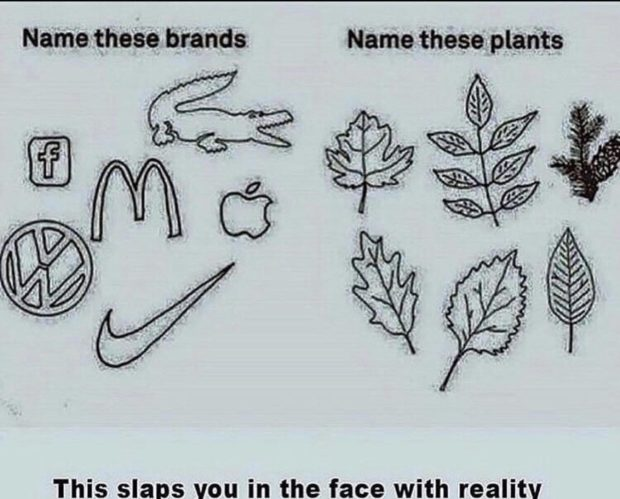 Name-these brands. Name these. plants This slaps van in the face https://inspirational.ly