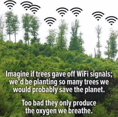 Phone Bad Tree Good