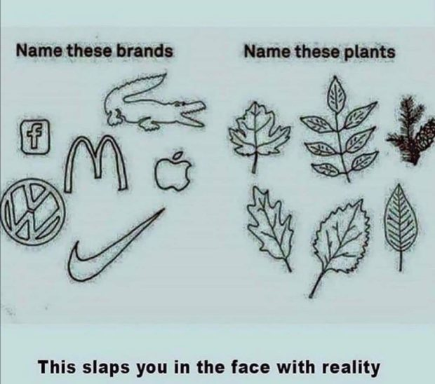 Name-these brands Name these plants This slaps you in the face https://inspirational.ly