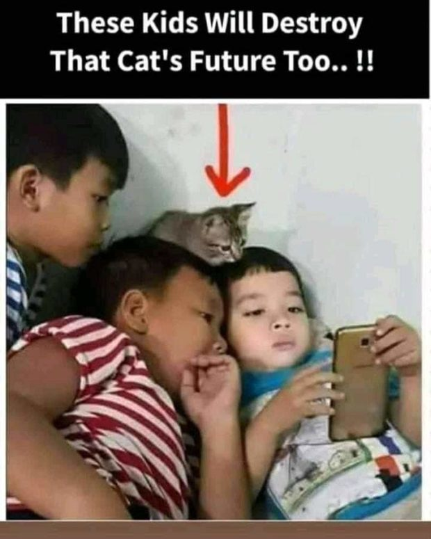 These Kids Will Destroy That Cat's Future Too.. !! https://inspirational.ly